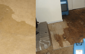 Wet Carpet Cleaning Service Adelaide
