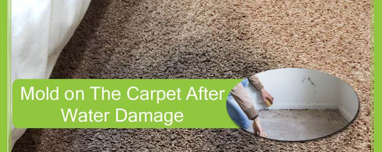 Mold on The Carpet After Water Damage